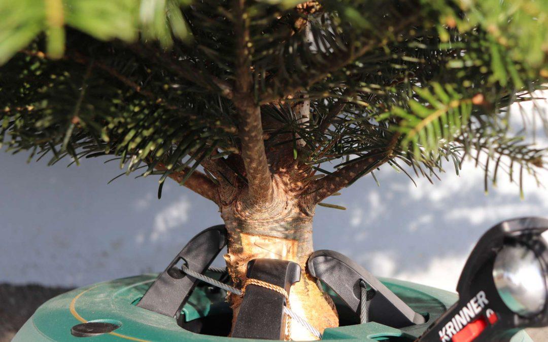 Tipps für deinen Weihnachtsbaum